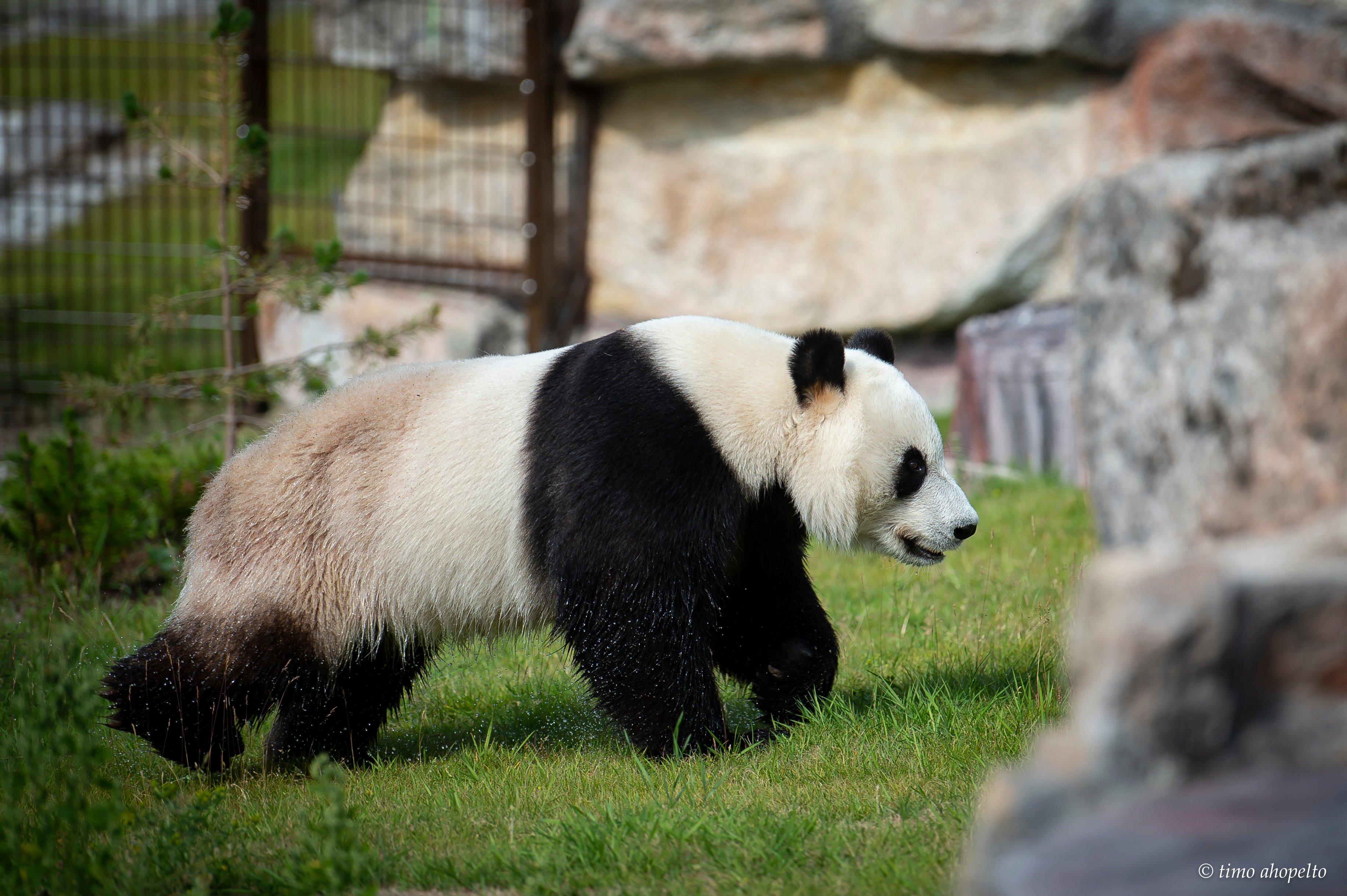 Ähtäri Panda